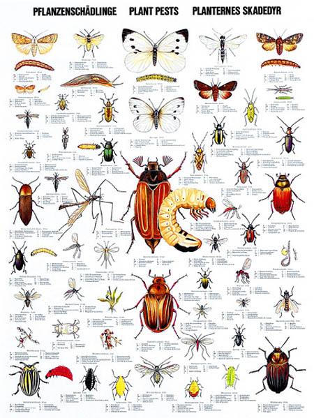 House Bug Identification